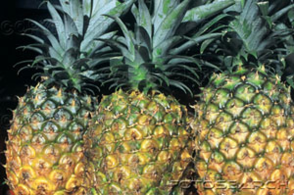 Abacaxi e Morango